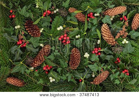 Winter flora and fauna of holly, mistletoe and ivy leaf sprigs with blue spruce and pine cones forming a background.