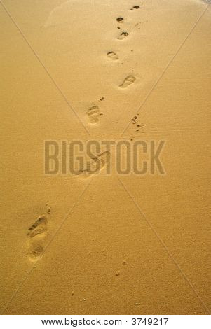 Footsteps On A Sunny Tropical Beach