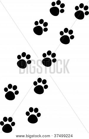 Cat Paw Track