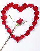 Red Rose Inside Rose Petals In Heart Shape poster