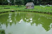 foto of polonia  - small hut and ducks swimming in pond in the Masuria region in Poland - JPG