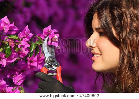Attractive Gardener Woman Cutting Flowers With Secateurs