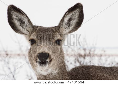 Happy deer