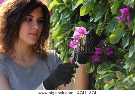 Beautiful Gardener Woman Cutting Flowers With Secateurs
