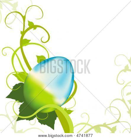 Easter Egg Vine