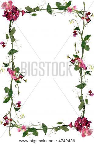 Roses Flowers Frame