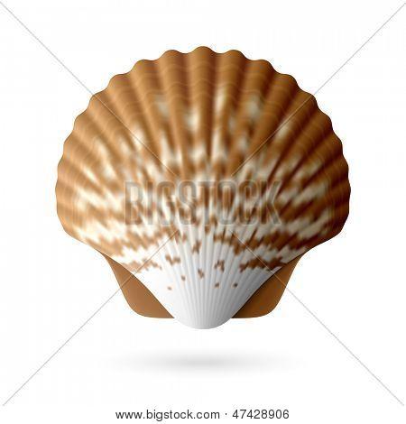 扇贝海洋背景素材