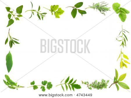 Fresh Herb Leaves