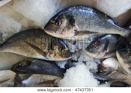fishes in fishmonger,