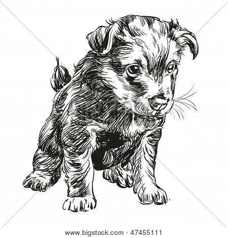 puppy dog hand drawn vector llustration