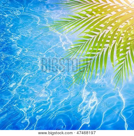 Closeup on fresh green palm tree leaves border on beautiful clean water background, pool on the tropical beach, luxury spa resort