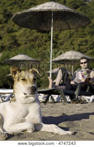 Dog On Tropic Beach
