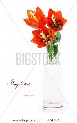Flower - imperial fritillary in a vase. isolated on white background