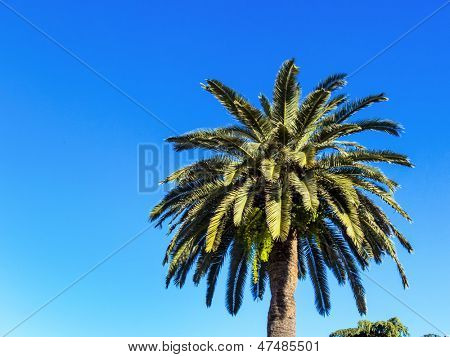 palm tree against blue sky, symbolic photo for holidays, around the world, exotic