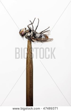 Fly on skewer