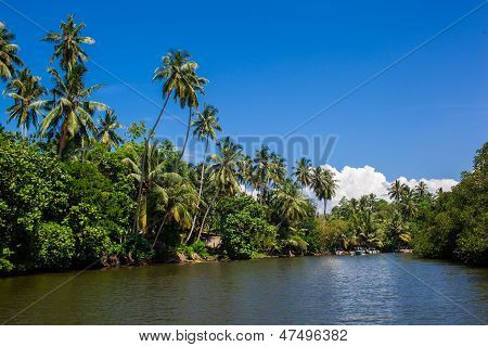 Palms And Pond, Sri Lanka
