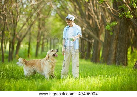 Portrait of cute lad playing with Labrador in park