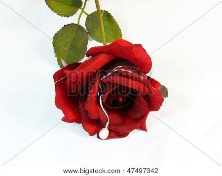 Rosa por San Valentino