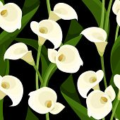 foto of calla  - Vector seamless pattern with white calla lilies and leaves on a black background - JPG