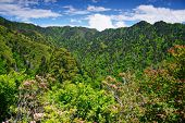 pic of gatlinburg  - Summer landscape in the Smoky Mountains near Gatlinburg - JPG
