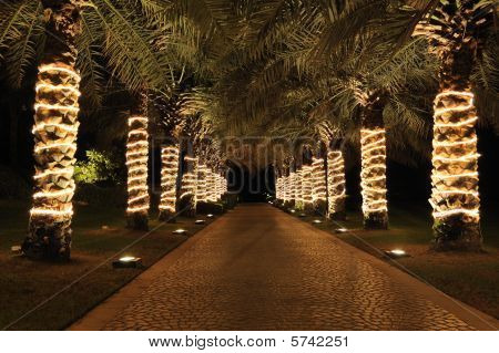 Palm Lane In Night Illumination, Jumeira, Uae