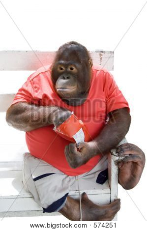 Monkey Eating Chips