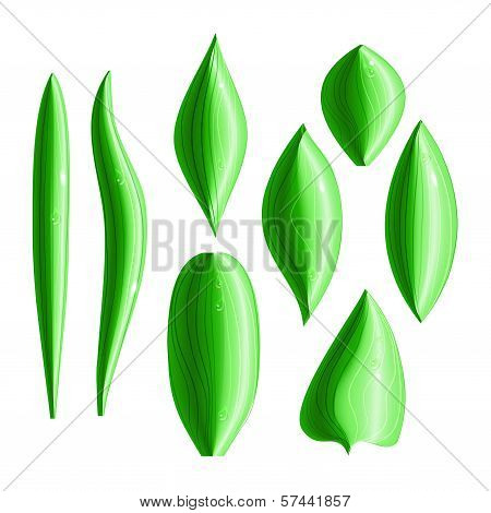 Set Of 8 Types Of Shiny Green Leaves With Dew Drops. Eps10