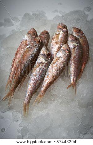 Fresh Fish, Mullet