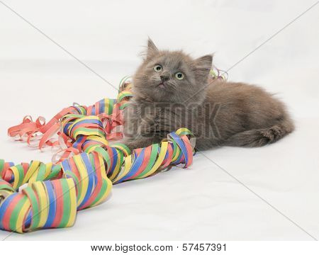 Fluffy Gray Kitten Playing With Serpentine