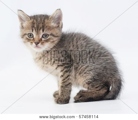 Striped Fluffy Kitten Sits With A Sad Look