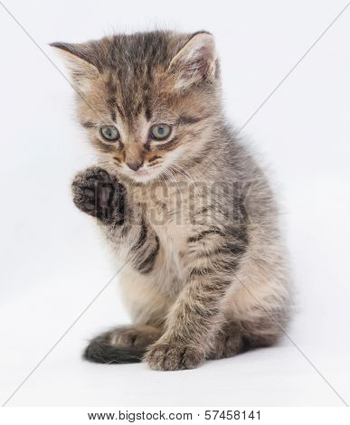 Striped Fluffy Kitten Washes Paw