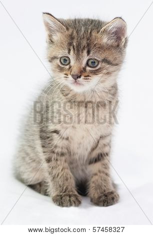 Striped Fluffy Kitten Sitting Confused