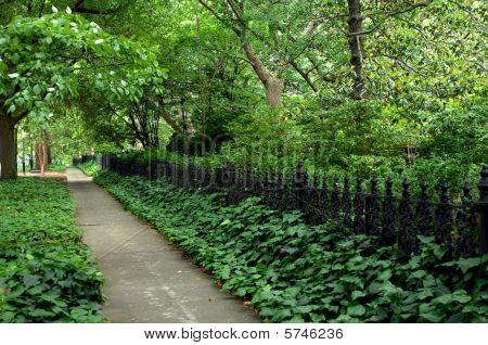 Along A Shaded Sidewalk