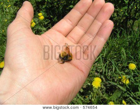 Death Of Bumblebee