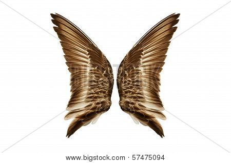 Pair of natural bird wings from outside view