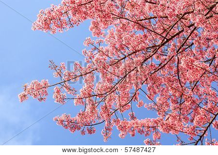 Beautiful pink blossom