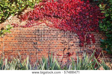 Red leaf on brick wall