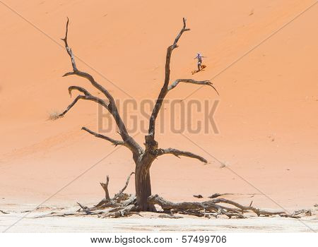 Sossusvlei, Namibia, 26 Dec 2013 - Tourist Runs Down A Red Dune. Namibia Is Famous For It's Red Dune