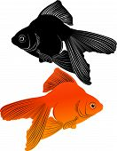 stock photo of aquatic animal  - goldfish carp nature animal aquatic chinese graphic - JPG