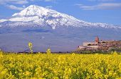 stock photo of apostolic  - Big Ararat in a field near the monastery of Khor Virap in Armenia - JPG