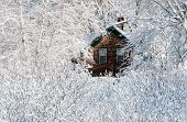 foto of shingle  - Wood shingled house surrounded by snow covered bushes and trees in New England after a storm - JPG