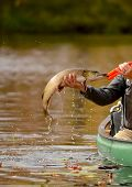 stock photo of canoe boat man  - man catching a pike fish while fishing in a canoe