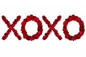 foto of xoxo  - Red dried rose petals arranged into xoxo - JPG