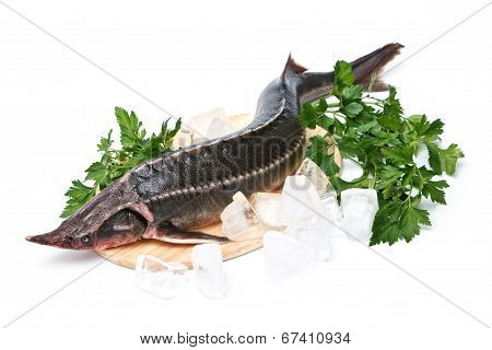 Raw Sturgeon With Greens On White Background