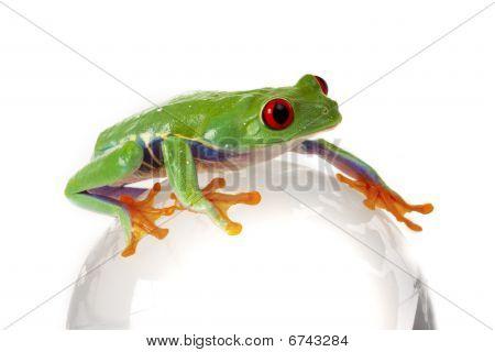 Frog around the World!