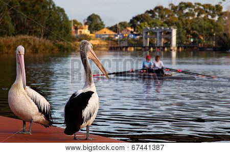 Two rowers and two birds