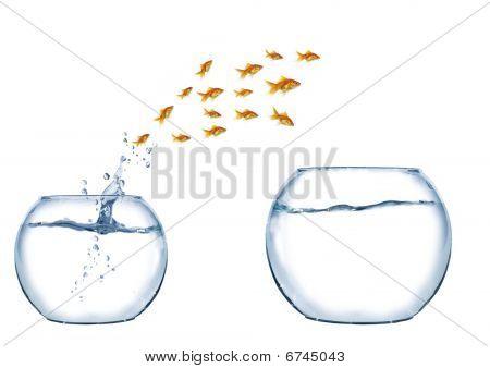 Jump Of Shoal Of Fish