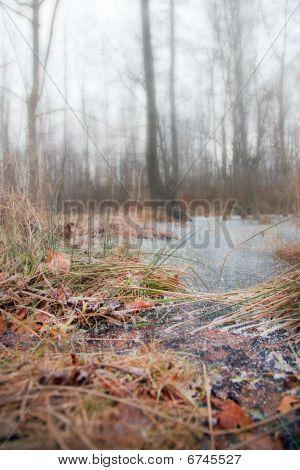 Frozen Winter Pond