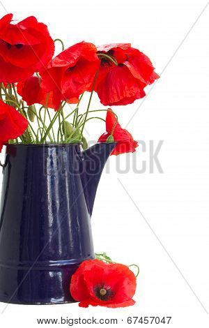 posy of poppy flowers