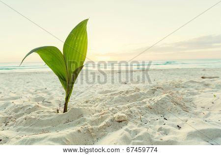 small palm tree on beach